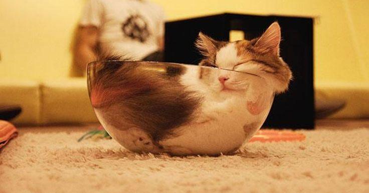 Estas imágenes demuestran que los gatos pueden dormir en cualquier lugar y en las posiciones más extrañas. Lo importante es encontrar lo que les parezca más cómodo, aunque eso sea una pared, cajas de zapatos. ¡Cualquier cosa es buena para ser una cama, estos gatos lo comprueban al 100%!