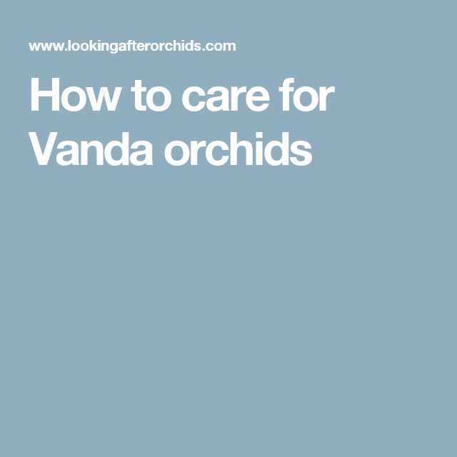 How to care for Vanda orchids