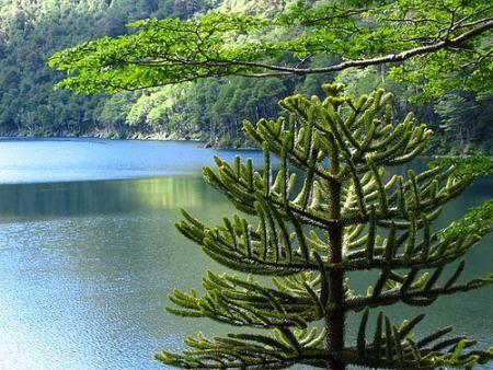 Parque Nacional Huerquehue -Chile