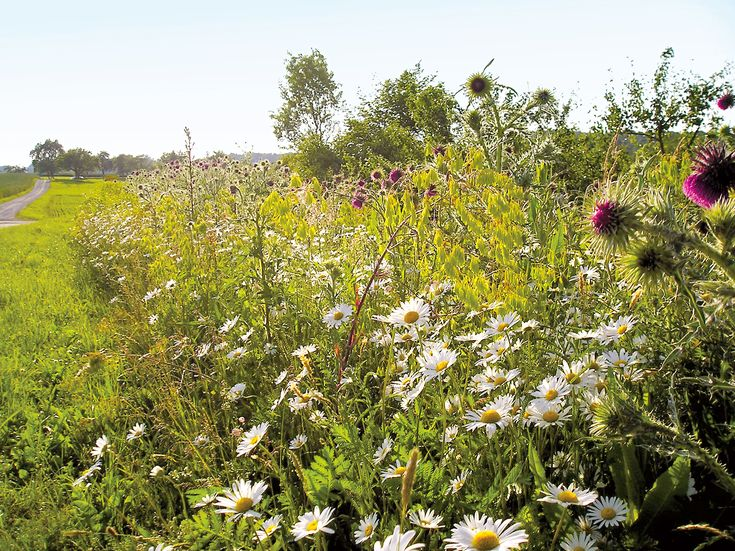 Ecoflora, Ecologische kwekerij en tuinwinkel