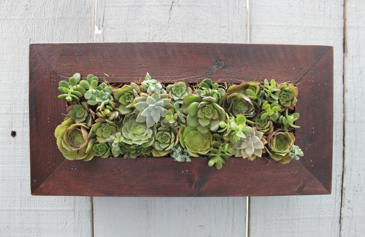 build it or buy it: succulent wall planters. If you want the look minus messing with a miter saw, Buy It; $120 via @etsy