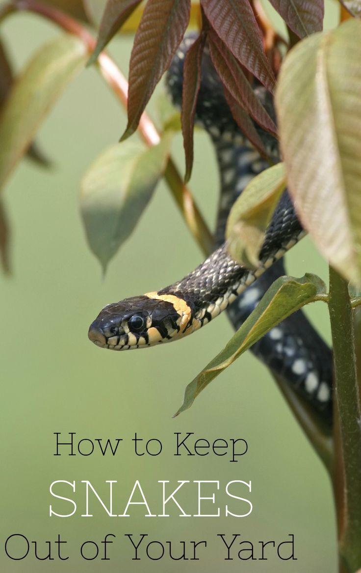 best 25 keep snakes away ideas on pinterest snake repellant
