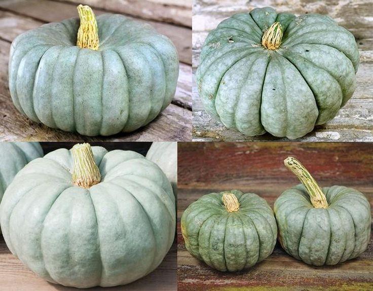 #тыква #pumpkin