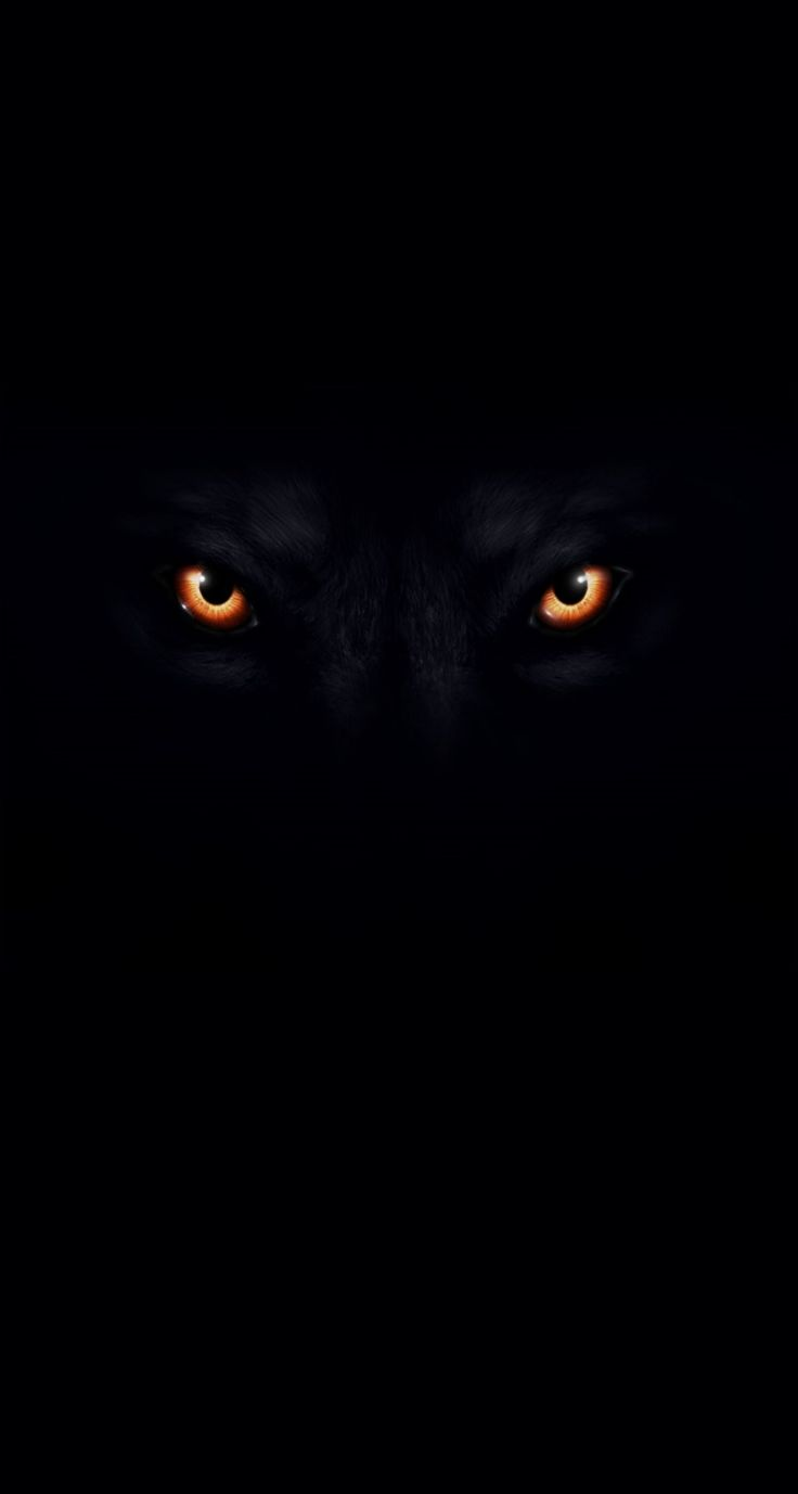 black wolf computer wallpapers - photo #26