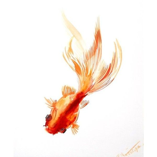 Goldfish, original Asian Style watercolor painting, 10 X 8 in,... ❤ liked on Polyvore featuring home, home decor, wall art, fish paintings, fish wall art and fish home decor