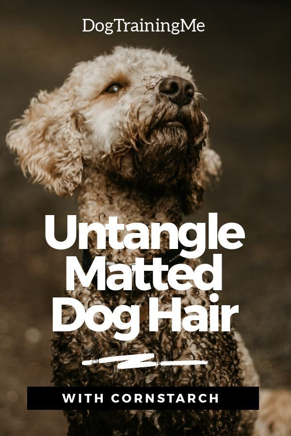 Learn How To Untangle Matted Dog Hair With Cornstarch Dematting Your Dog With Corn Starch Will Help To Keep Your Pup Healthy Dog Training Dogs Matted Dog Hair