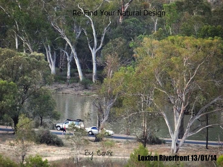 Our River Murray at Loxton Riverfront. On Grant Schubert Drive. A busy road right on our rivers edge.  South Australia. Riverland.