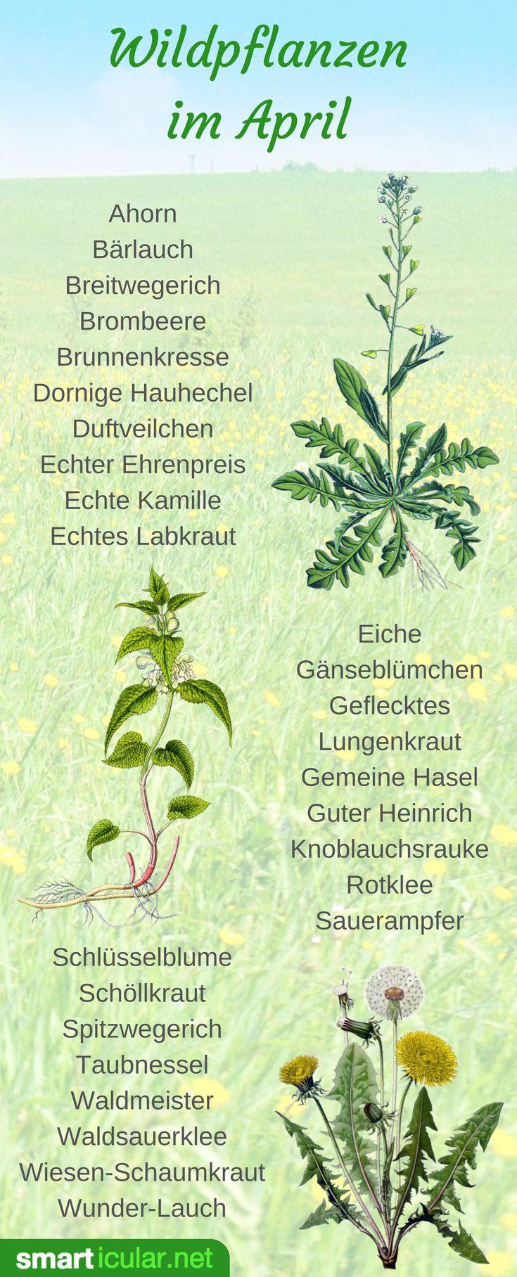 Die 25+ Besten Ideen Zu Essbare Pflanzen Auf Pinterest | Überleben ... Pflanzen Fur Frische Luft Nutzen