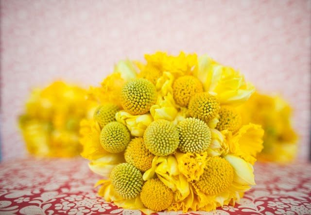 "Craspedia: yellow ""billy button"" flowers"