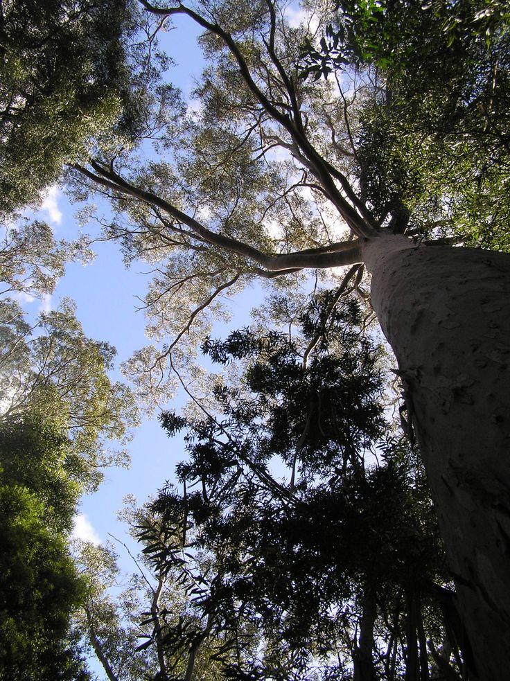 Studio Bonnici — Canopy, Cradle Mountain N.P. Tasmania...