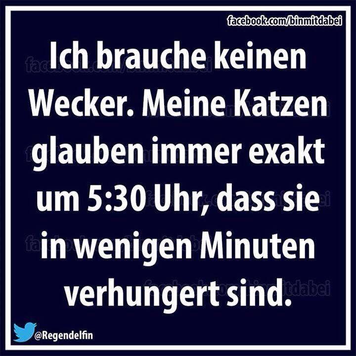 Weckerkatzen :)