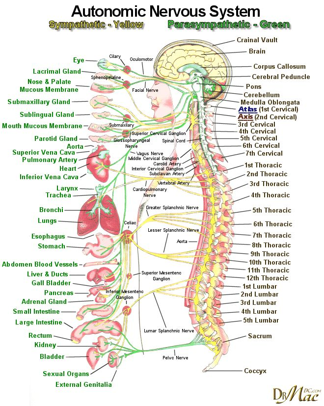 nervous system course notes Nervous system notes 1 the nervous system anatomy & physiology essentials  of human anatomy & physiology 2 functions of the.