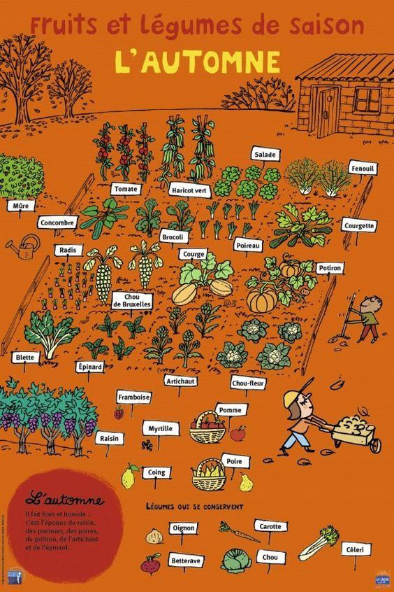 End result et légumes – Automne