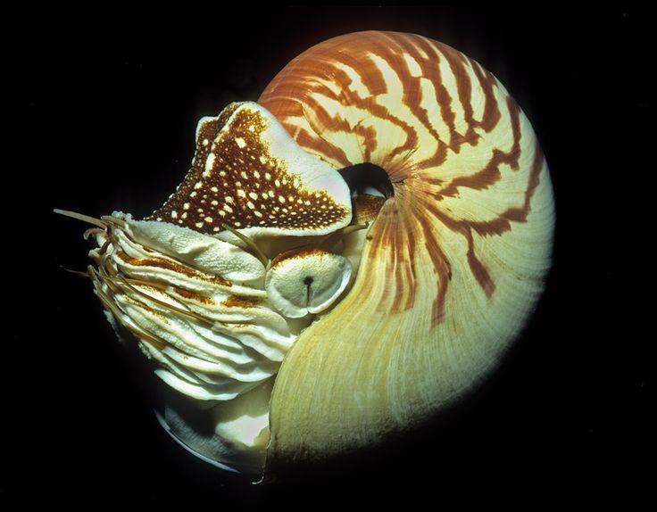 Nautilus Side View.jpg (936×730)