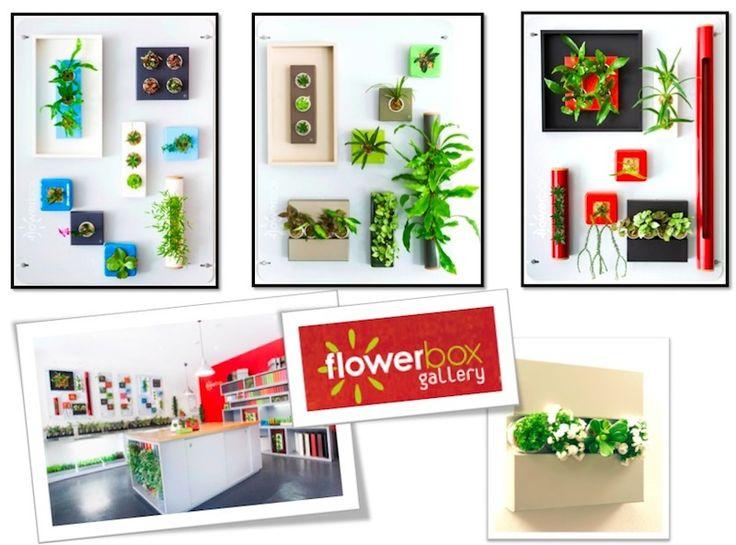 Flower Box: Glebe