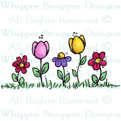 Flowers & Tulips