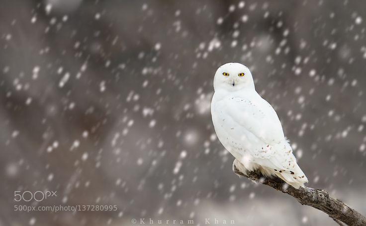 Let it snow let it snow! by mkhanz25 via http://ift.tt/1PdHyyg