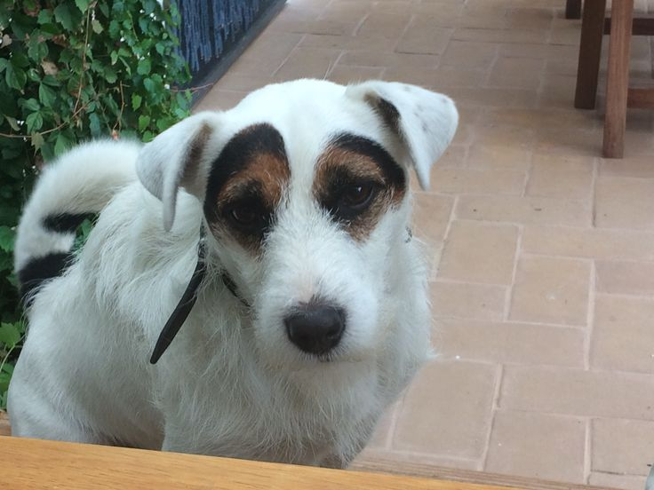 Chase JRT