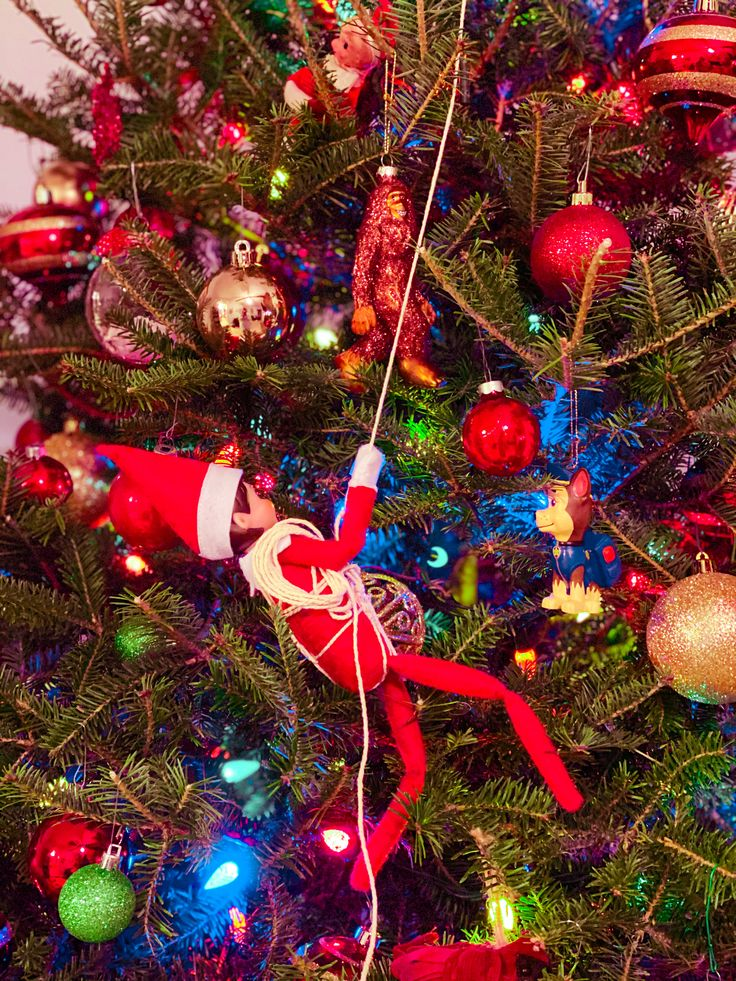 Elf on the shelf idea tree climbing in 2020 Holiday