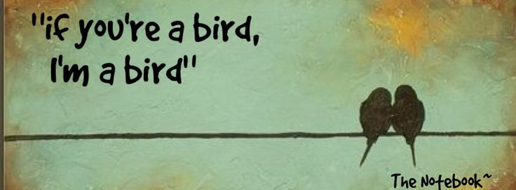 """If you're a bird, I'm a bird"" The Notebook ~ facebook cover"