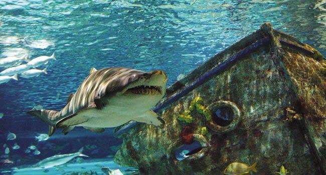 Ripleys Aquarium Gatlinburg Home Ripley 39 S Aquarium Of