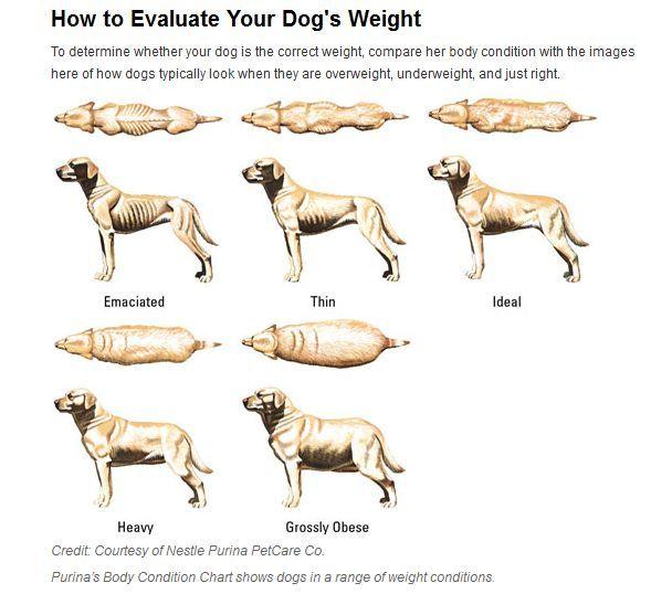 Can A Malnourished Dog Get Altered