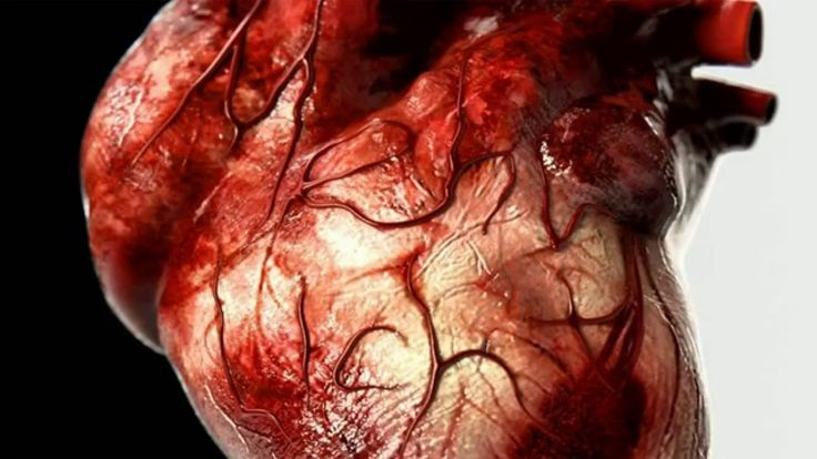 Biology - Heart structure & blood circulation through hearth (simple exp...
