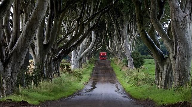 The Dark Hedges, Irlanda del Norte (En ella se filmo el final, de uno de los capitulos de GAME OF THRONES season Two) Los túneles de árboles más extraordinarios del mundo