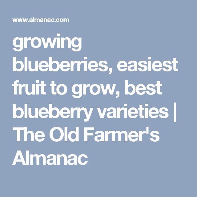 growing blueberries, easiest fruit to grow, best blueberry varieties   The Old Farmer's Almanac