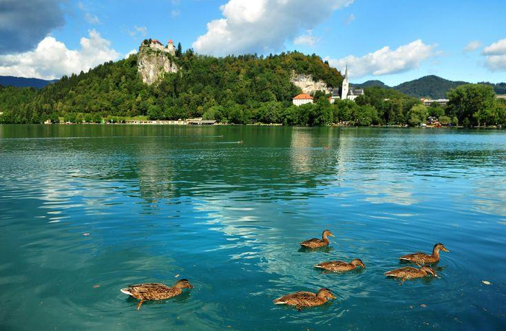 Slovenia Bled