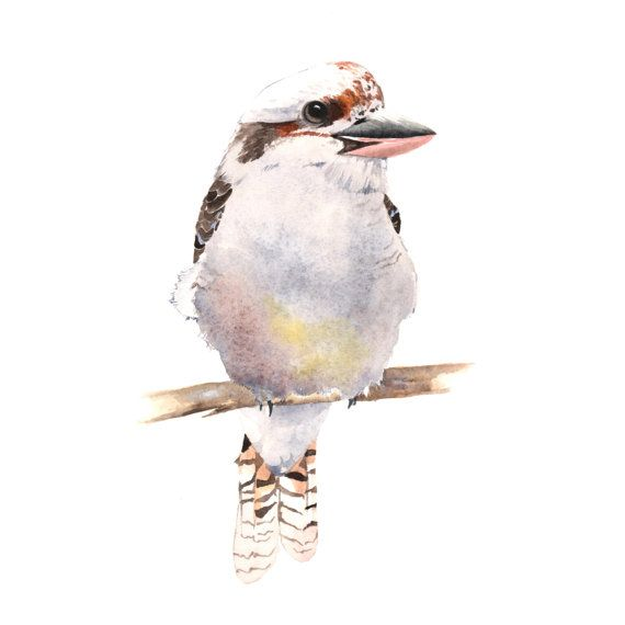 Kookaburra Painting bird watercolor print of watercolor painting A4 via Etsy