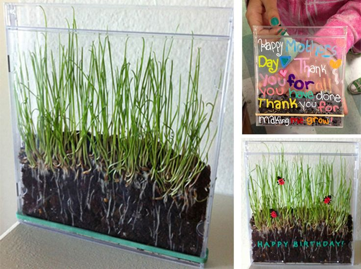 Growing Grass in a CD Case. Reuse, recycle and re-gift! #earthday #recycle