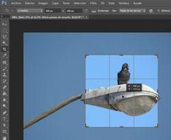 Curso Photoshop. Recortar fotos o imágenes con medidas específicas