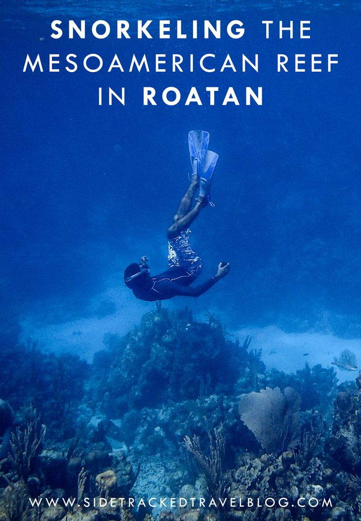 Snorkeling the Mesoamerican Reef in Roatan http://www.deepbluediving.org/best-dive-watches/