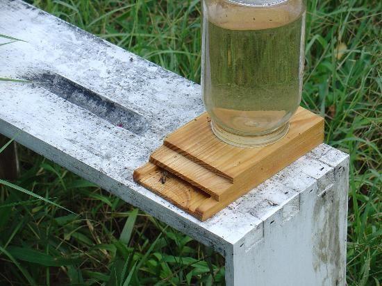 beekeeping bee feeder