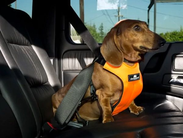New crash test protocol and ratings system will standardize car safety for dogs. The Center for Pet Safety has looked to remedy this situation by establishing the Safety Harness Crash Test Protocol and Rating System. The hope is to ensure the safety of both humans and pets through standardized guidelines.
