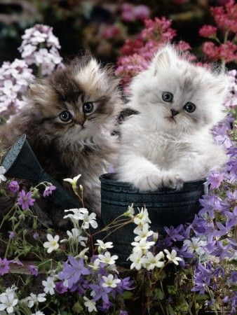 Precious kittens, what could be more cute?