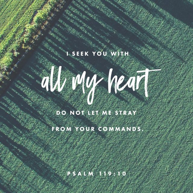 """With my whole heart have I sought thee: O let me not wander from thy commandments."" ‭‭Psalms‬ ‭119:10‬ ‭KJV‬‬ http://bible.com/1/psa.119.10.kjv"