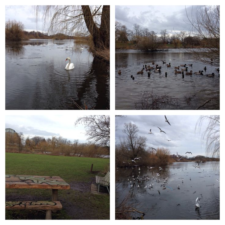 Utterslev Mose. Naturområdet breder sig om 2 store søer. Her er massere af fugleliv, rig mulighed for at fiske, gå, løbe eller cykle rundt.