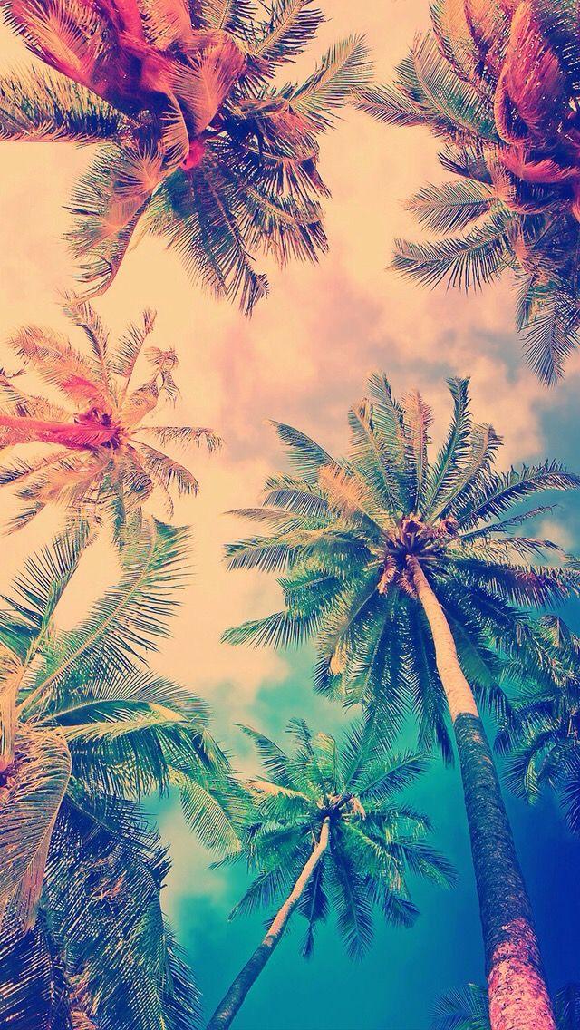 #palme #colors #nature