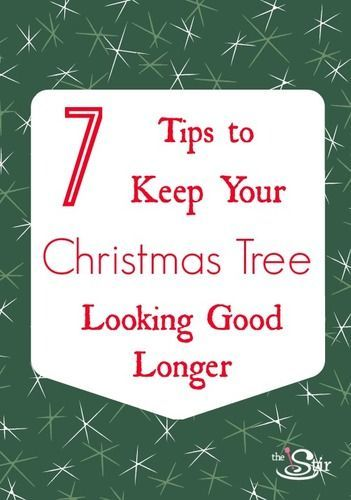 11 best images about christmas tree tips keeping your tree alive fresh on pinterest trees. Black Bedroom Furniture Sets. Home Design Ideas