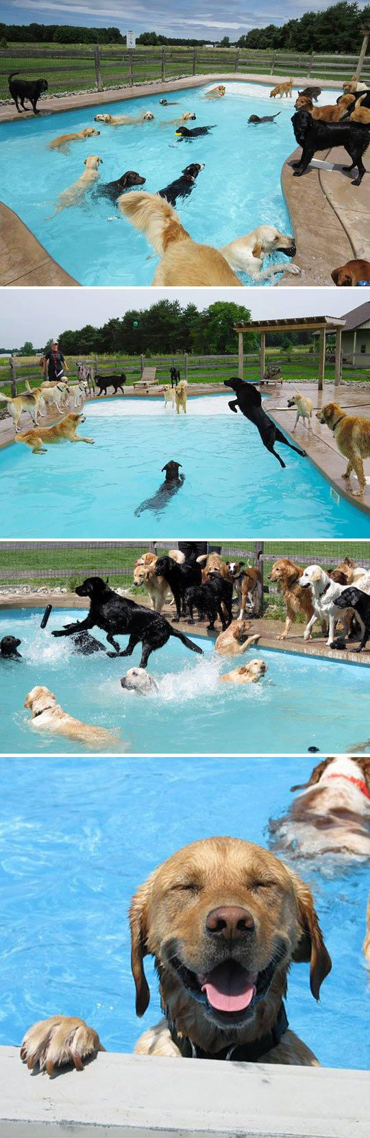 HOW. CUTE. IS. THIS. - Doggy Pool Party at Lucky Dog Daycare. Click through to watch the videos. Talk about happy dogs...love this :))