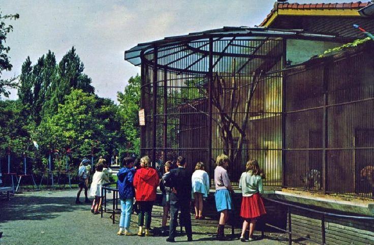 Plaswijck Park Rotterdam (jaartal: 1970 tot 1980) Heel vaak bezocht met mijn ouders. Met lijn 4 naar de halte stadhuis aan de Straatweg en dan een stukje lopen naar de ingang. Deze apenkooi stond redelijk aan het begin van het park met rondom de papagaaien die rijkelijk gevoerd werden met pinda's.