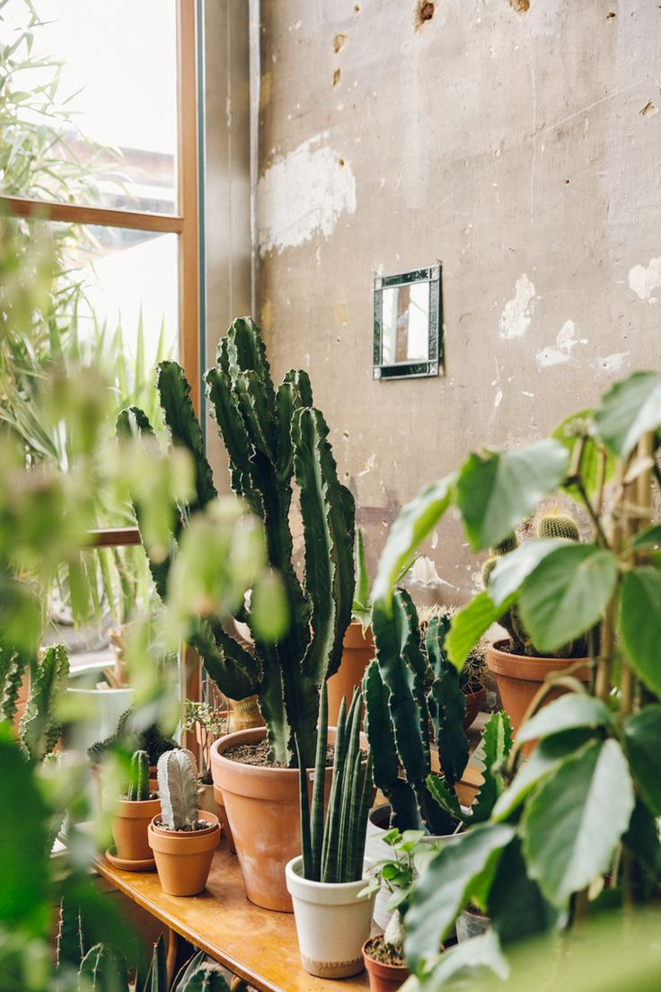 Instagram is a wonderful thing. It joins us all together and introduces us to things/people/places that we might not have seen otherwise. This place is somewhere that we found this way and we're so glad that we did. Conservatory Archives is a plant shop.
