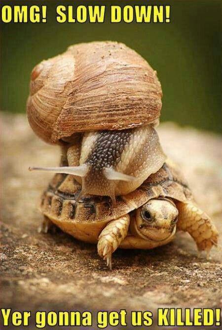 Slow down already.