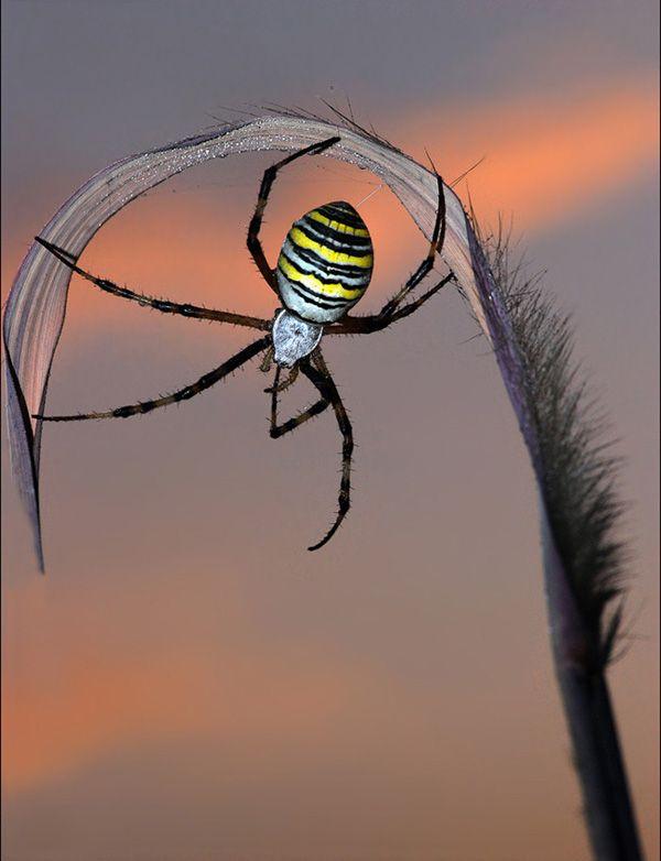 spider                                                       …                                                                                                                                                     More