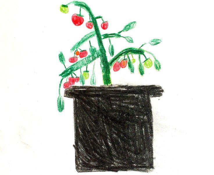 Lag jord med bokashi i en plantesekk eller stort plantekar i vinter, så har du fantastisk næringsrik jord å dyrke til våren. Du kan dyrke rett i jordfabrikken!