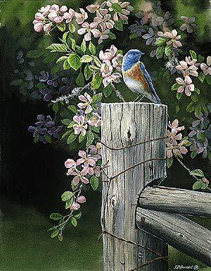 Bluebird  Apple Blossom