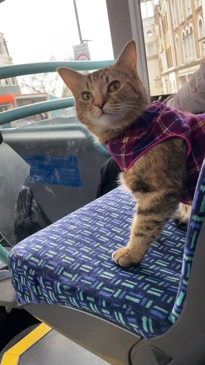 Quita the Kitty on a London Bus crossing Richmond Bridge