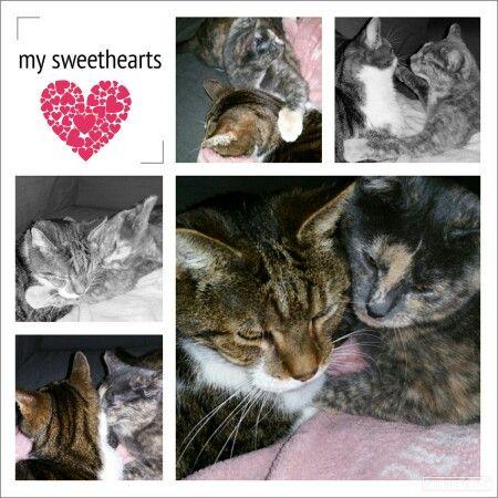 My sweethearts